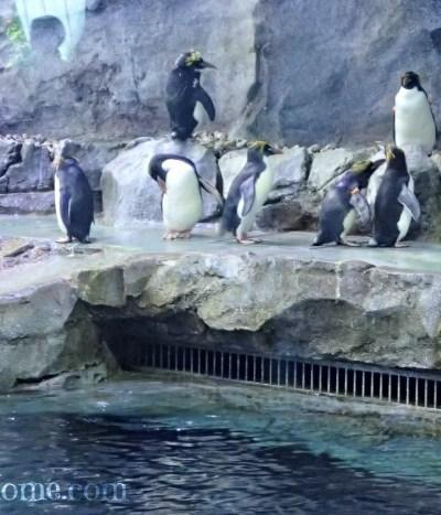 Polk Penguin Conservation Center Detroit Zoo
