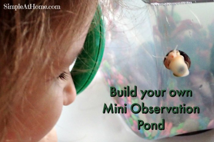 homeschool with a mini observation pond