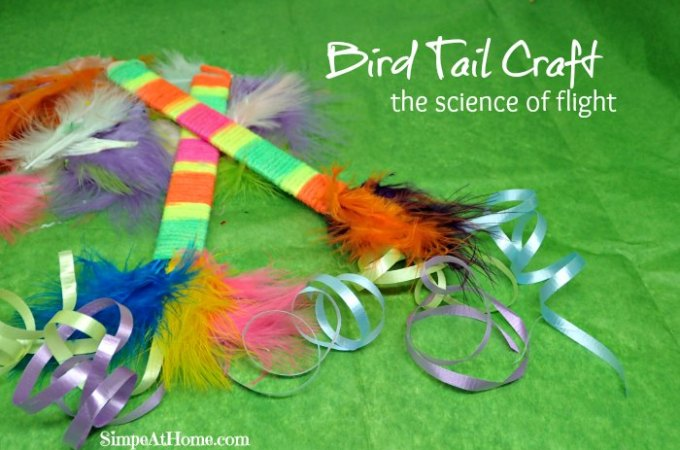 Bird Tail Craft