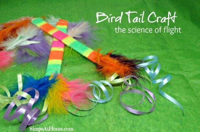 Bird Tail Craft
