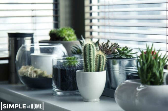 Plants that Grow Well Indoors