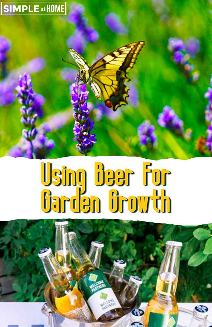 Uses for beer in your garden - Did you know beer is good for you garden? It sure is! These ways to use beer in your garden will have you growing lush and healthy plants in no time! Tips For Using Beer For Garden #garden #gardeningtips #beer #gardentips