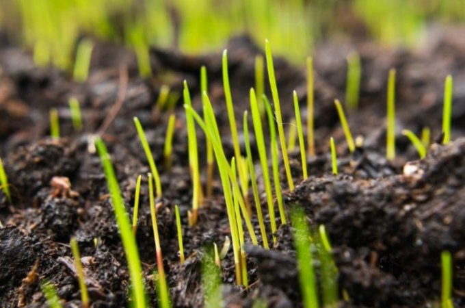 6 serious questions about grass seed answered