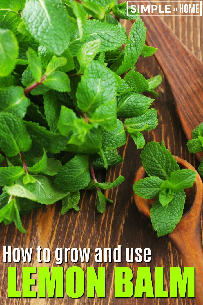 how to grow and use lemon balm