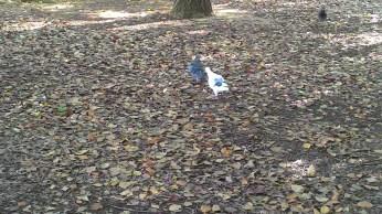 homing pigeons :)