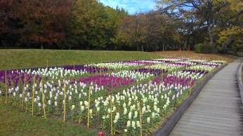 a flower garden