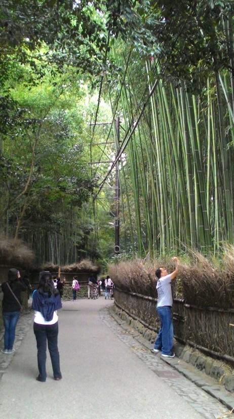 the bamboo grove at daytime