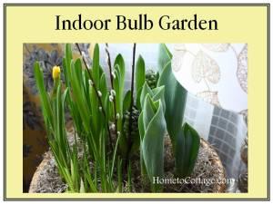 HometoCottage.com Indoor Bulb Garden