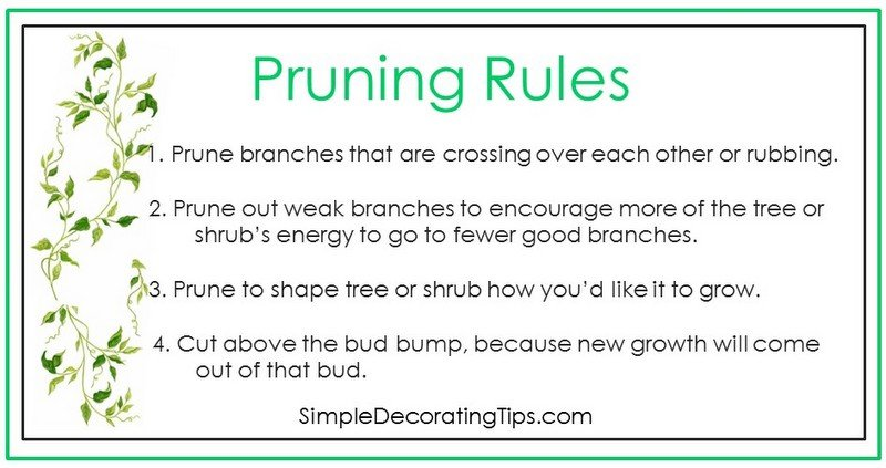 SimpleDecoratingTips.com pruning rules