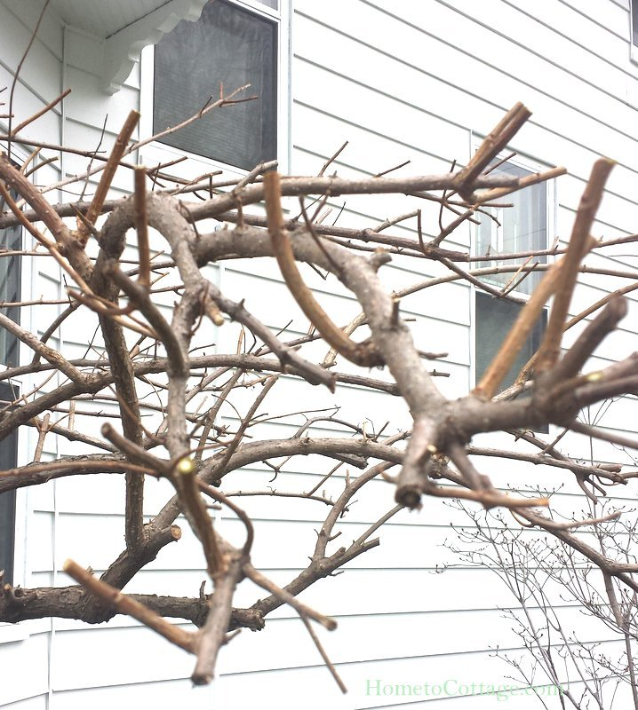 HometoCottage.com branches everywhere