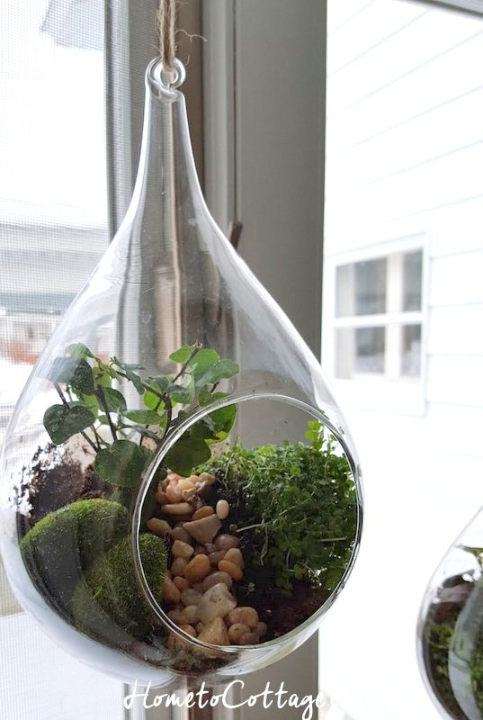 HometoCottage.com hanging terrarium all done