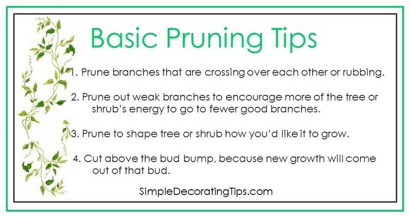 SimpleDecoratingTips.com basic pruning tips