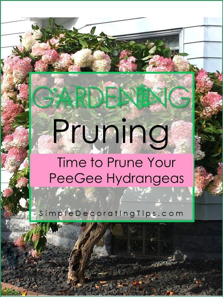 SimpleDecoratingTips.com gardening time to prune your peegee hydrangea