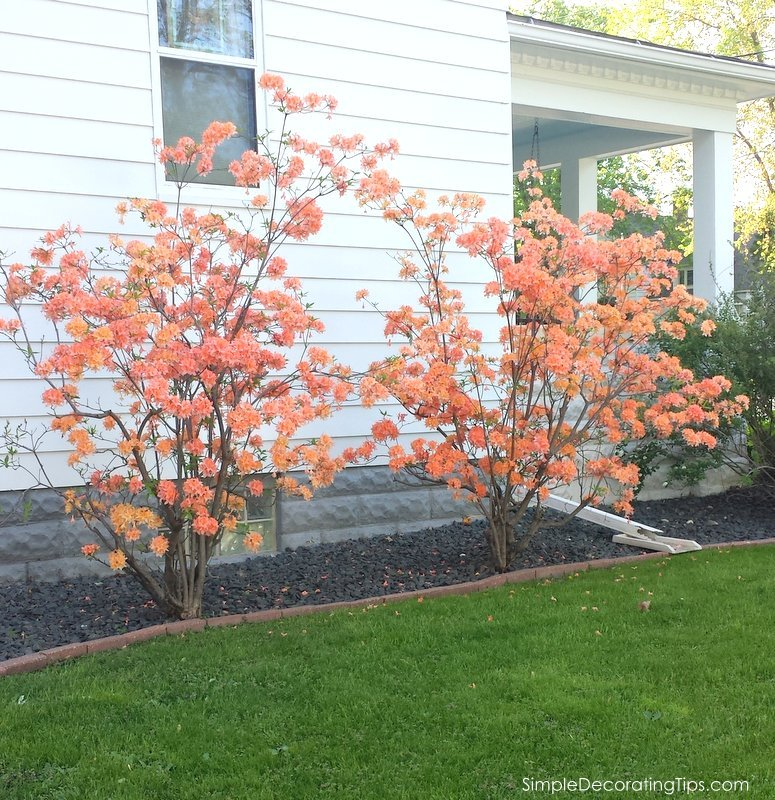 SimpleDecoratingTips.com how landscaping changed our 100 year old house