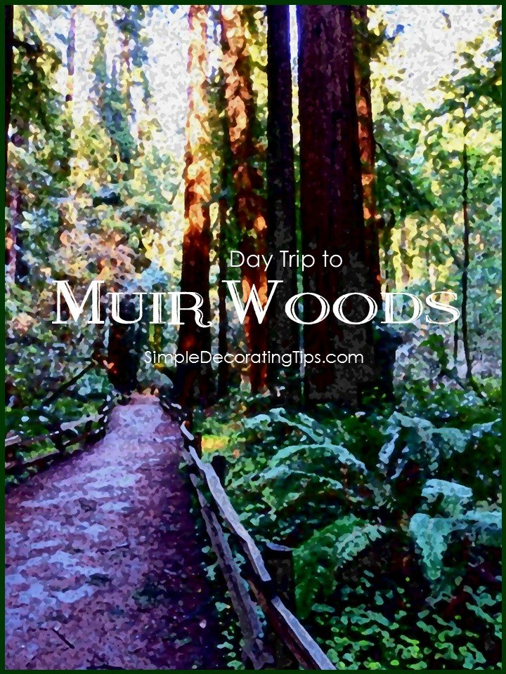Day Trip to Muir Woods SimpleDecoratingTips.com