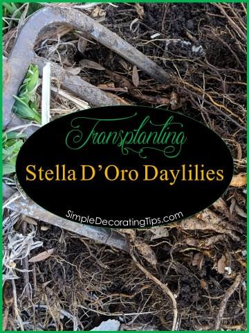 Transplanting Stella D'Oro Daylilies SimpleDecoratingTips.com