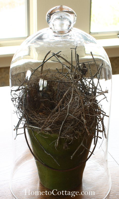 HometoCottage.com blue jay nest under cloche