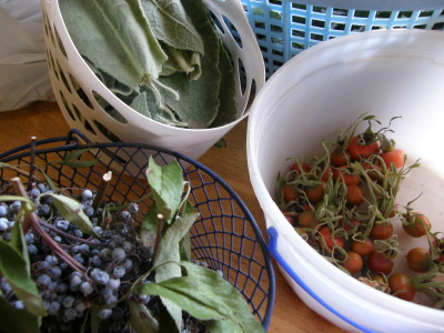 Gathered Wild Herbs
