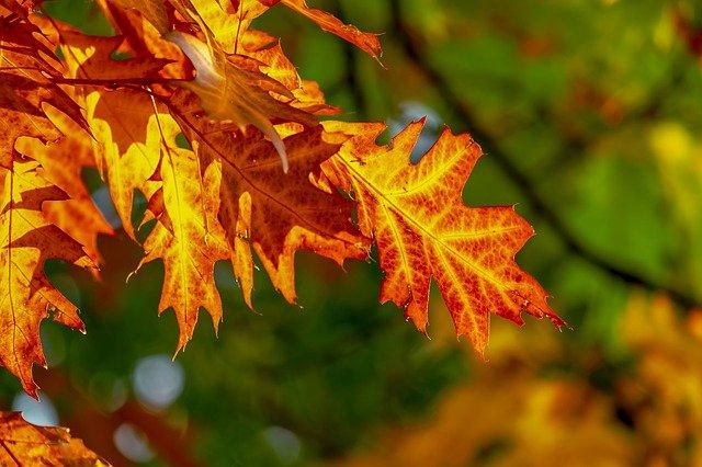 fall foliage 3736055 640