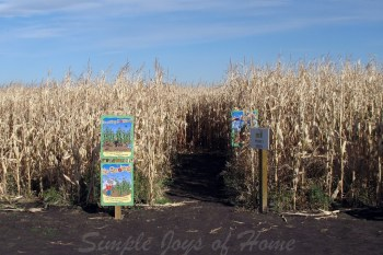 31 Days of Autumn {Day 27}: Corn Maze