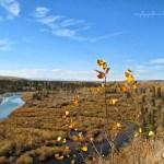 31 Days of Autumn {Day 20}: Nature Walk