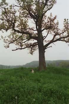 littlekatebigtree