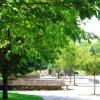 【ヒルナンデス】江戸川区の良いところ特集!公園の広さが東京ドーム75コ分って本当か