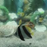 マツコの知らない水族館の世界!ヒットプロデューサーが選ぶ超穴場オススメ5館とは