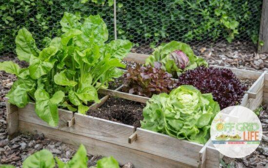 Homestead Blog Hop Feature - Cold Frame Gardening Frugal DIY Ideas