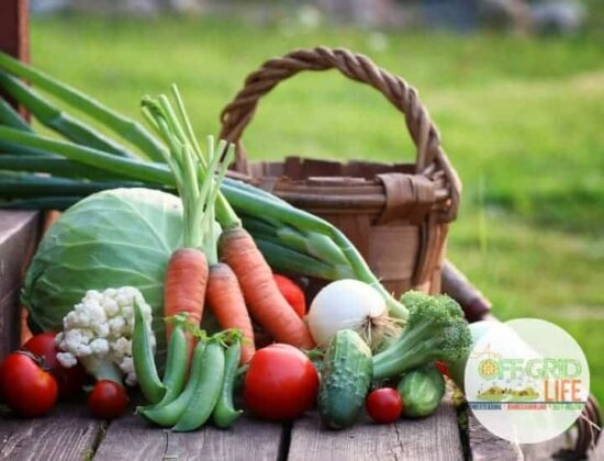 Homestead Blog Hop Feature - How to Store Your Harvest without a root cellar