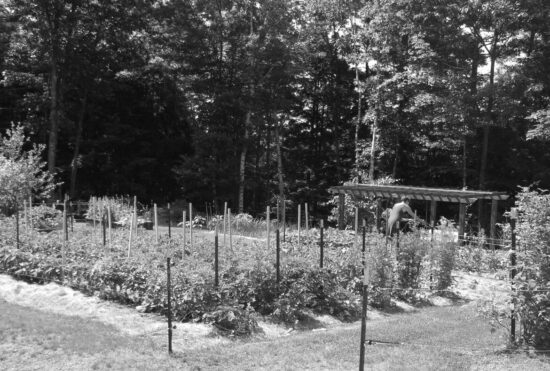Homestead Blog Hop Feature - Victory-Garden-Resurgence