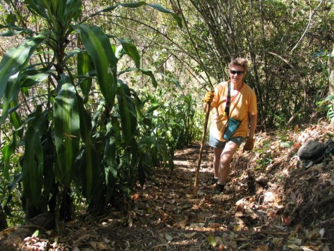 Cis Wilson hikes a trail bordered with planted corn plant