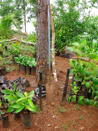 Photos of machetes and a spade in a tree shaded spot in the tree nursery
