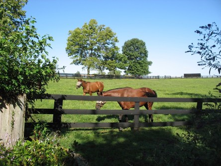 Photo of horses on Stonelea Farm in Prospect, Kentucky, USA