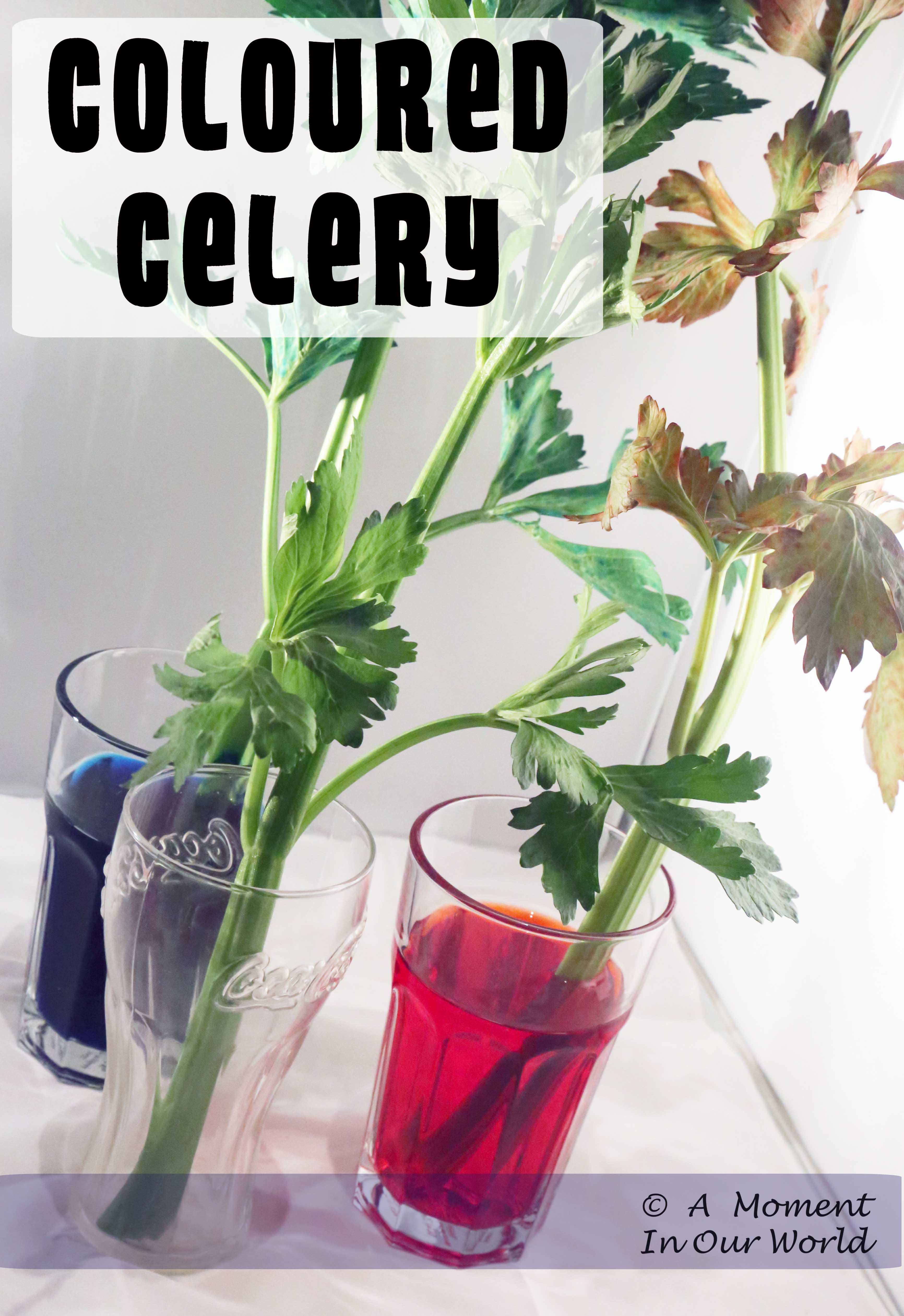 Making Celery Colourful