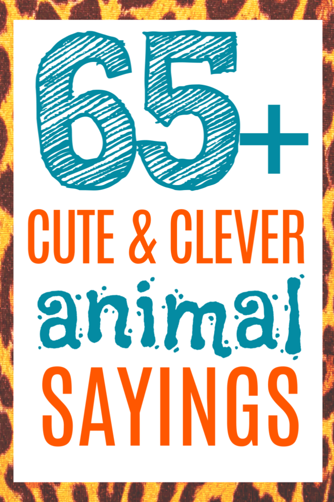 Click NOW for 65+ clever quotes, puns and funny animal sayings for your animal themed cards! #cutesayings #cleverquotes #sayings