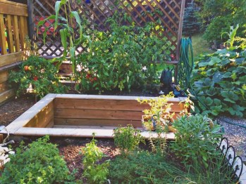 gardening herbs tomatoes raised garden beds
