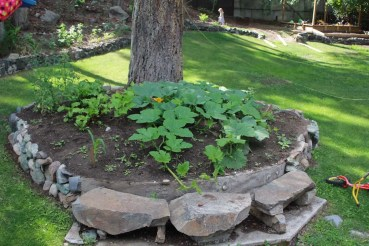 new sqaush plants