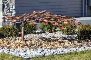 creeping japanese maple fountain kit
