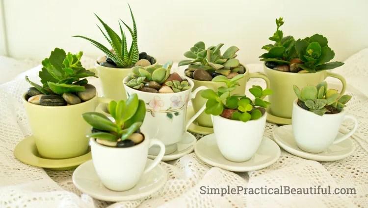tea-cup-pots