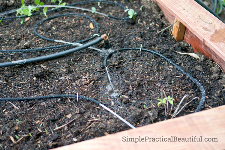 easy to install tubing for a drip system