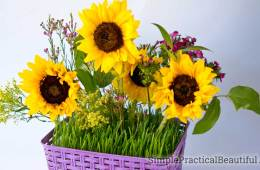 A sunflower bouquet arranged in a basket filled with living grass