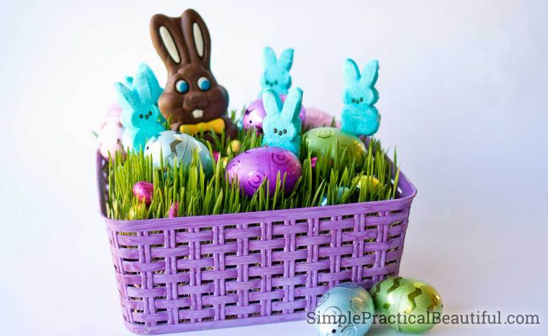 An Easter basket filled with living wheat grass and chocolate Easter candies and eggs