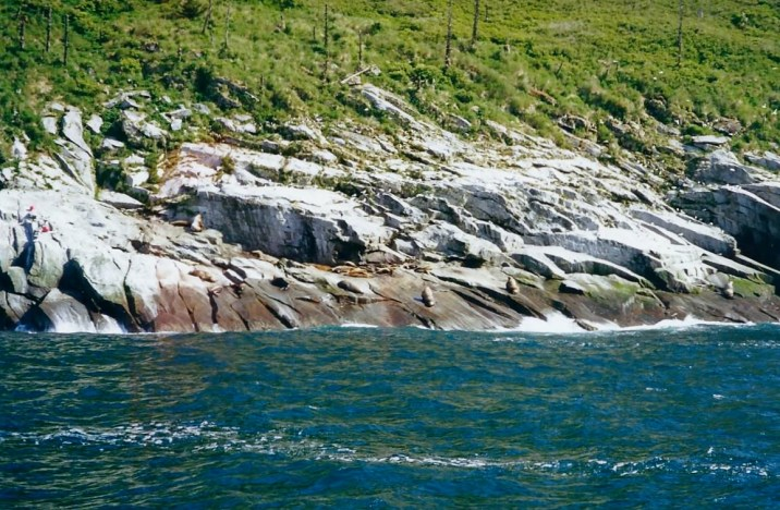 SEA LION COLONIES