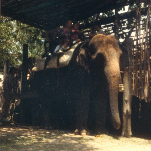 San Diego Safari Park elephant ride 1986 | Simple Sojourns