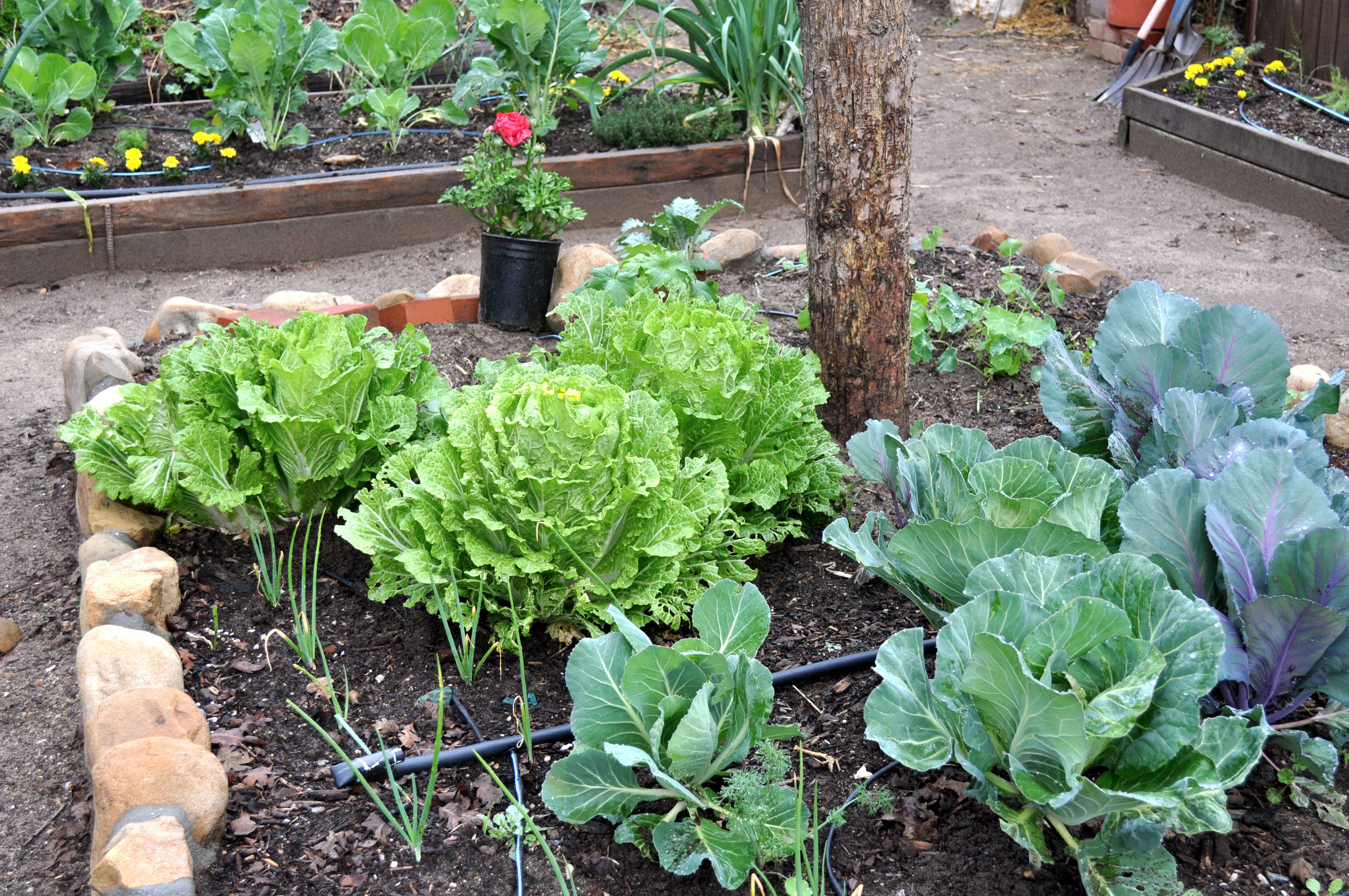 Urban gardening for dummies a good guide for everyone for Indoor gardening for dummies