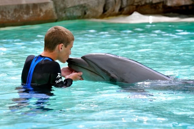 Sea World Swimming with the Dophins | Simple Sojourns