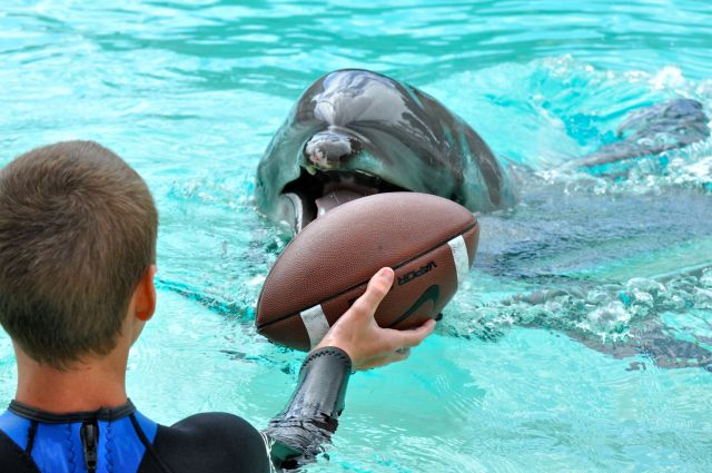 Dolphin Encounter - Simple Sojourns