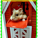 Hamster High Jinks