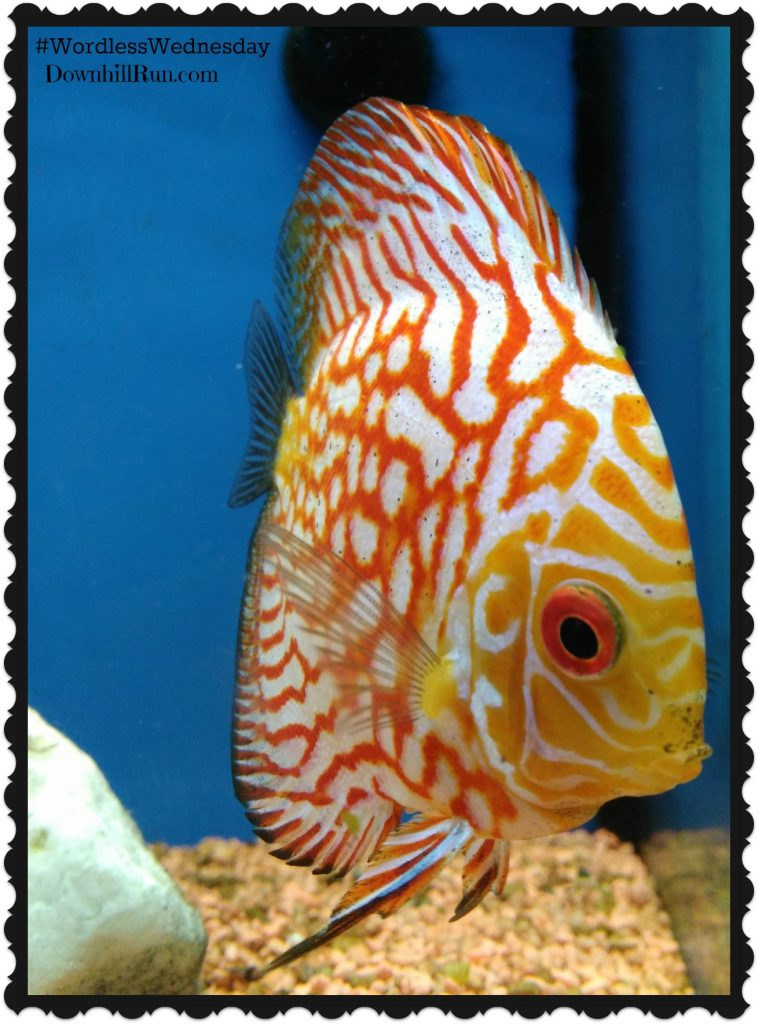 Wordless Wednesday Salt Water Fish